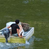 ご海老に餌をやる風景